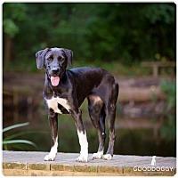 Adopt A Pet :: Jozi - Morganville, NJ