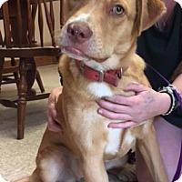 Adopt A Pet :: Emma - Cashiers, NC