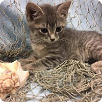 Adopt A Pet :: Coral - Savannah, GA