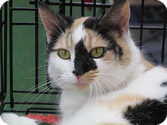 Calico Cat for adoption in Port Republic, Maryland - Sparkles