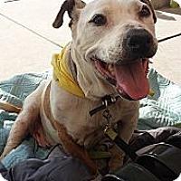 Adopt A Pet :: Ruby - Fowler, CA