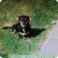 Adopt A Pet :: Cosky - San Diego, CA