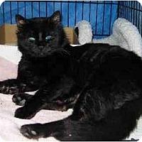 Adopt A Pet :: Dude - Westfield, MA