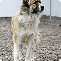 Adopt A Pet :: Bonnie - Cambridge, IL