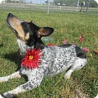 Adopt A Pet :: Abby - Lockhart, TX