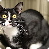 Adopt A Pet :: Bette Davis - Marietta, GA