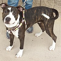 Adopt A Pet :: Molly - Grand Prairie, TX