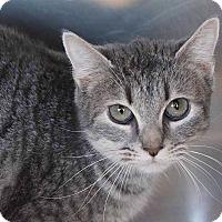 Adopt A Pet :: Abby - Sierra Vista, AZ