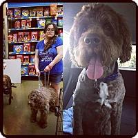 Adopt A Pet :: Yougi - Los Angeles, CA