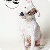 Adopt A Pet :: Gidget - Apache Junction, AZ