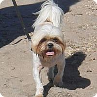 Adopt A Pet :: Bo - Lockhart, TX