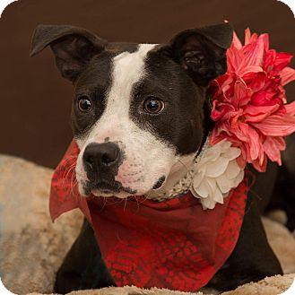 Terrier (Unknown Type, Medium) Mix Dog for adoption in Flint, Michigan - Lexus