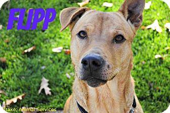 Chow Chow Mix Dog for adoption in Hamilton, Ontario - Flip
