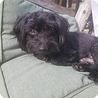Adopt A Pet :: Gabe - Fairmont, WV