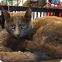 Adopt A Pet :: Penelope - Oakland, CA