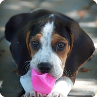 Adopt A Pet :: Sketchers - Barnesville, GA