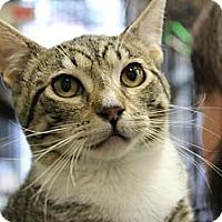 Adopt A Pet :: Julianne - Santa Monica, CA