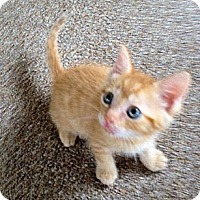 Adopt A Pet :: Orange - Orlando, FL