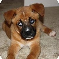 Adopt A Pet :: Crystal - Madison, WI