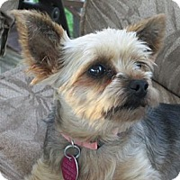 Adopt A Pet :: Lilia - Rigaud, QC