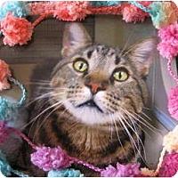 Adopt A Pet :: Roman - Brea, CA