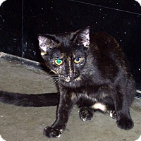 Adopt A Pet :: Regina - Albany, NY