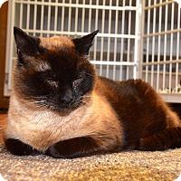 Adopt A Pet :: Regina - Des Moines, IA