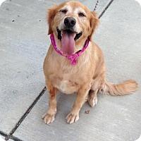 Adopt A Pet :: Caroline - Murrells Inlet, SC
