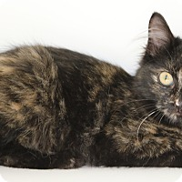 Adopt A Pet :: Mallory - Council Bluffs, IA