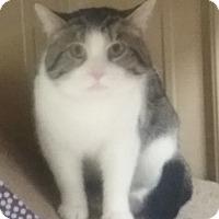 Adopt A Pet :: Rambo - Hopkinsville, KY