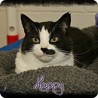 Adopt A Pet :: Happy - Shippenville, PA