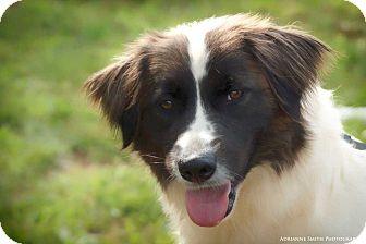 Border Collie Mix Dog for adoption in Barnesville, Georgia - Lady