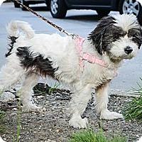 Adopt A Pet :: Edgar - New York, NY