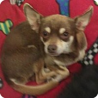 Adopt A Pet :: Todd - Phoenix, AZ