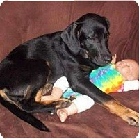 Adopt A Pet :: Layla - Fort Hunter, NY