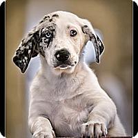 Adopt A Pet :: Jasmine - Wickenburg, AZ