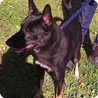 Adopt A Pet :: Cain - Metamora, IN