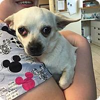 Adopt A Pet :: Lena $125 - Seneca, SC