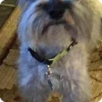 Adopt A Pet :: Fritz-NEWS! - Laurel, MD