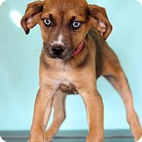 Adopt A Pet :: Minnie - Waldorf, MD