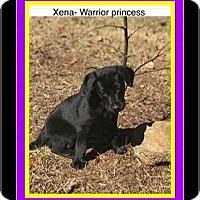 Adopt A Pet :: XENA - Milton, GA