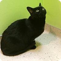 Adopt A Pet :: Fergie - Janesville, WI