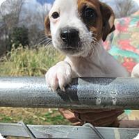 Adopt A Pet :: EZRA - Oswego, NY