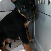 Adopt A Pet :: Maurice - Ogden, UT