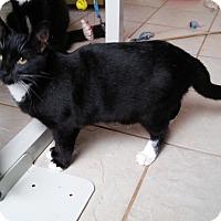Adopt A Pet :: Louise - Riverside, CA