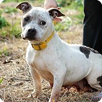 Adopt A Pet :: Minnie - Starkville, MS