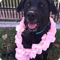 Adopt A Pet :: Sweets - Coldwater, MI