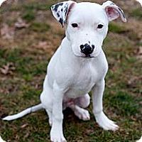 Adopt A Pet :: Ritz - Reisterstown, MD