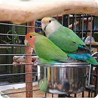 Adopt A Pet :: Joey & Rosie - Redlands, CA