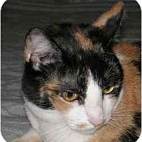 Adopt A Pet :: Izzy (*video*) - Portland, OR